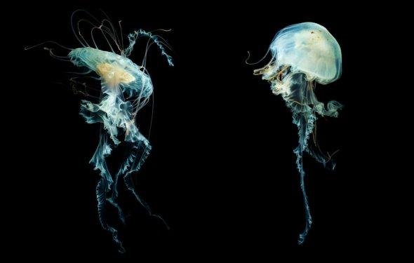 Meduza-3. «